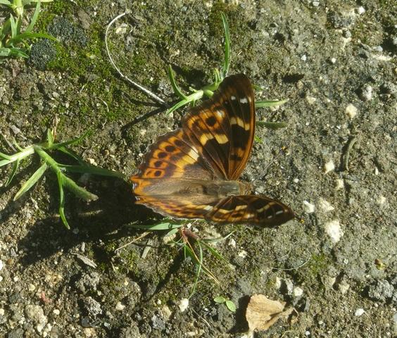 site de rencontre papillon